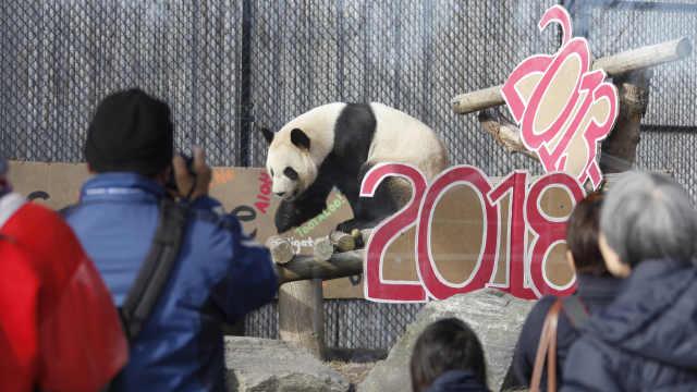 多伦多熊猫大毛二顺搬家,民众不舍
