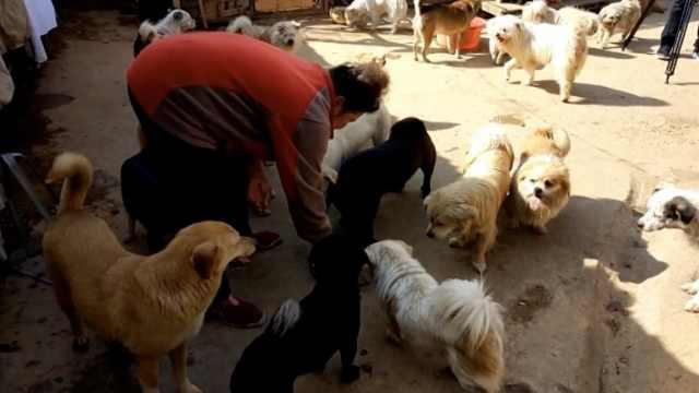 大妈自称卖房,21年收养270条流浪狗