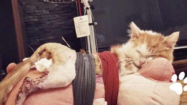 富养瘫痪流浪猫,美女妈妈自学针灸