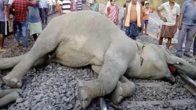 惨!印度疾驰火车,轧死四头大象