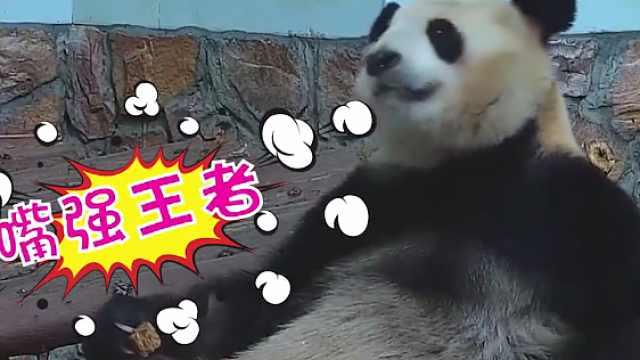 进击的咪咕熊猫惊:熊猫的旅行