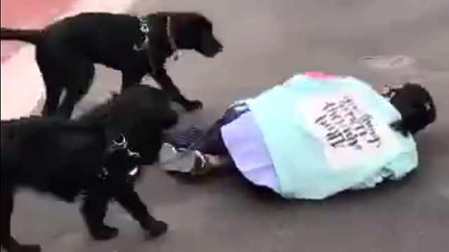 主人突然晕倒,狗狗会有什么反应?