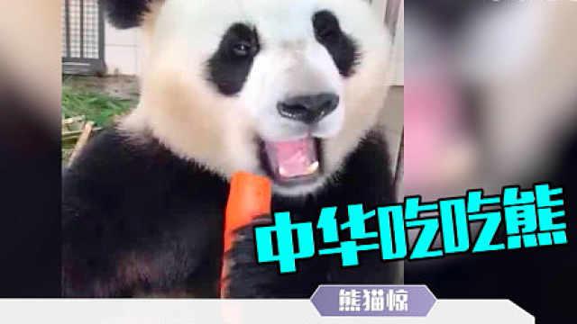 进击的咪咕熊猫惊:厨神熊猫!