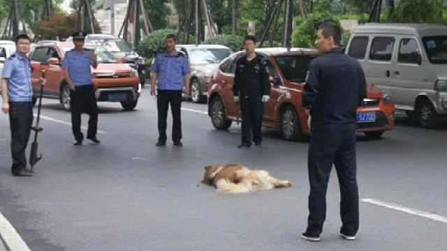 大狗连伤多人难寻主,警方当场击毙