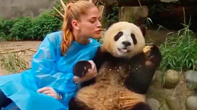 咪咕熊猫惊:暖男是怎么炼成的