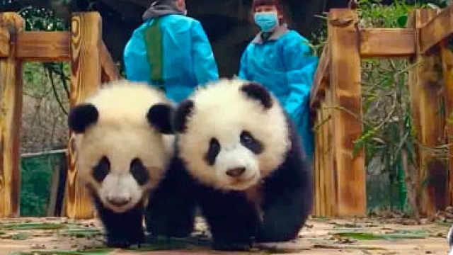 熊猫惊:熊猫大仙,法力无边