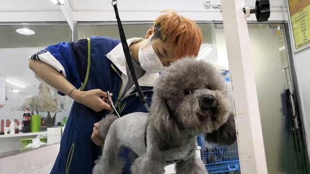 95后宠物美容师1天干12小时:像狗妈