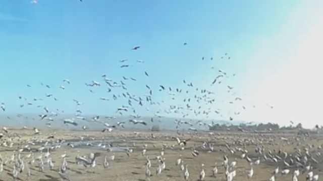 大场面!5亿只鸟聚在一起进食