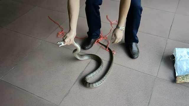 公园竹林惊现2米长蛇,游客被吓尖叫