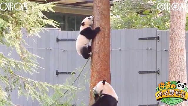 你一点都不胖,熊不许你减肥!
