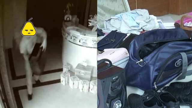 情侣合伙盗窃,房内搜出大量赃物