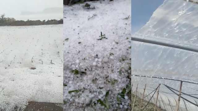 冰雹突袭!菜地变雪地,瓜棚打成筛子