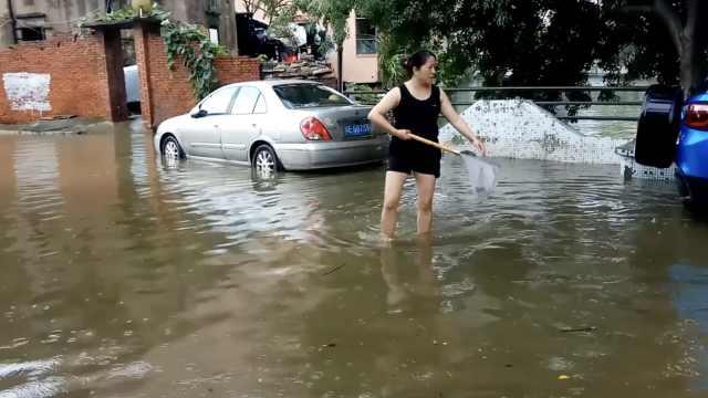 台风过境佛山,市民上街捞鱼抓黄鳝