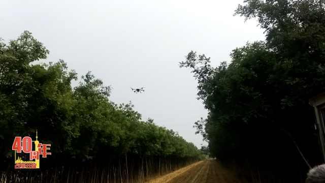从人背桶到无人机,农药喷洒迎巨变