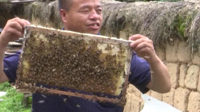 盲人养蜂20年:凭感觉养,习惯被蜂蛰