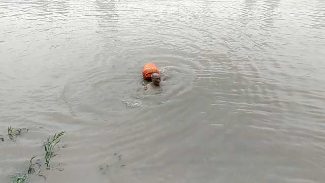 水越大我游得越狂!大爷涨水中游泳