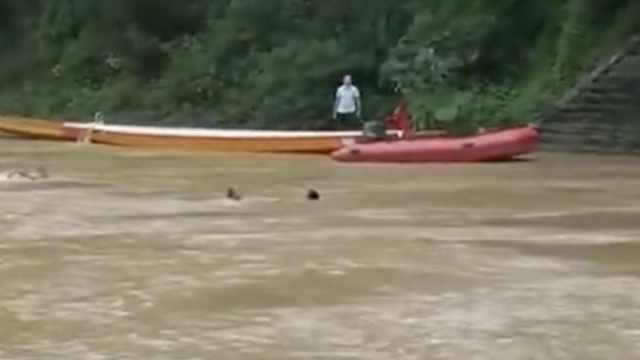 女子落水急流中挣扎,3男子跳河勇救