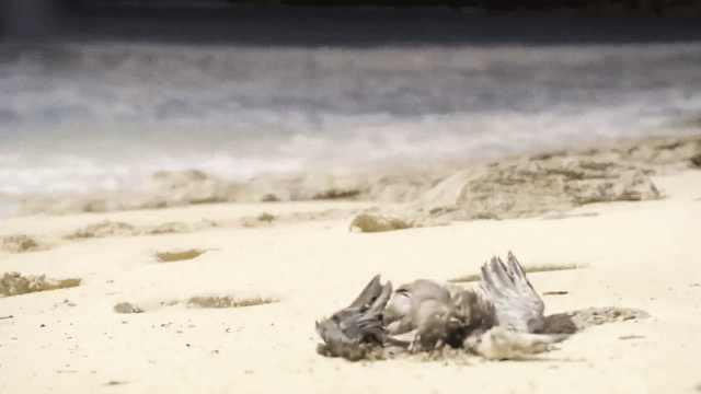 警告!你丢的这些正在夺取海燕的命