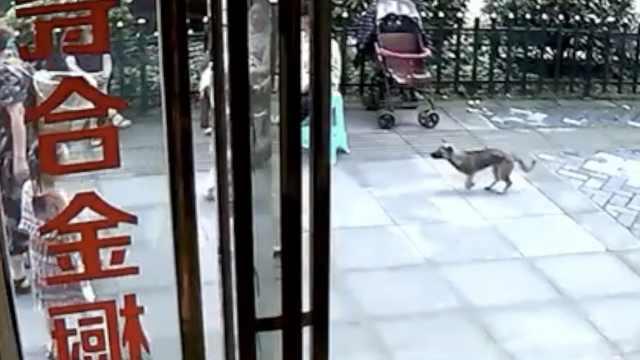2岁娃小区外玩耍,遭路边狗跳起撕咬