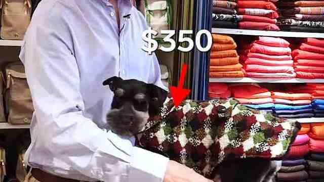 人不如狗系列:狗穿的比我还贵!