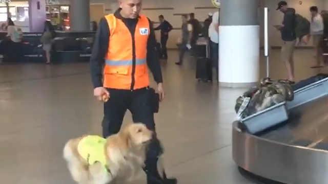 一只狗狗上班的热情都比我高!