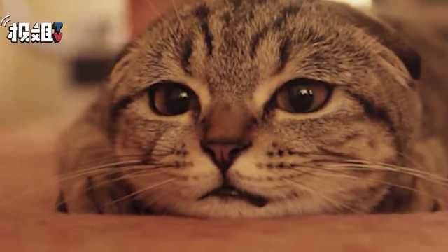 猫咪的日记本,看它们每天在想什么
