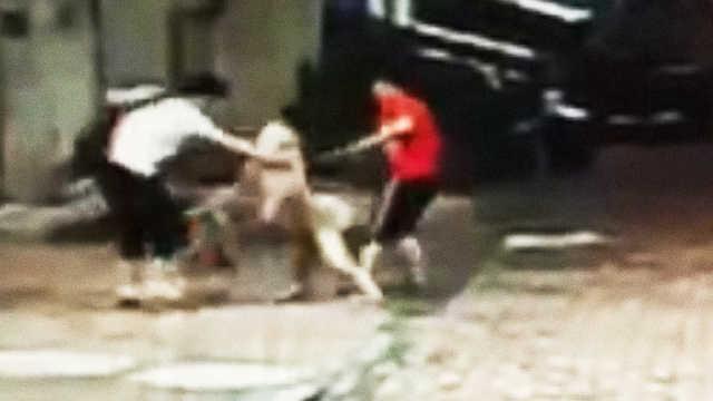 宠物狗街头突然发狂,扑向女子猛咬