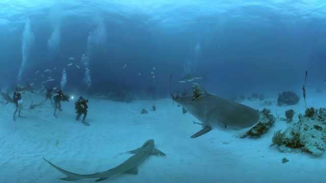 VR带你潜水深海,与鲨鱼共舞
