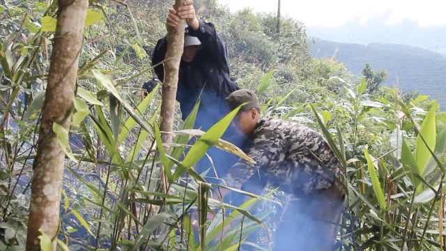 11人种5千棵橡胶树牟利,毁林120亩