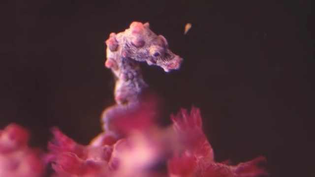 世界5种最小动物排行!