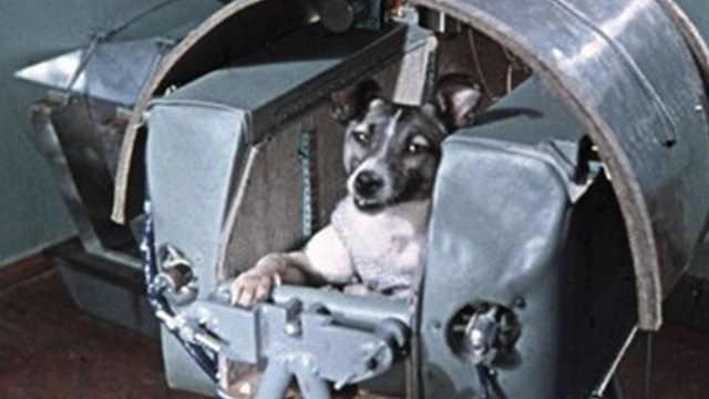 当年那个登上太空的狗狗怎么样?