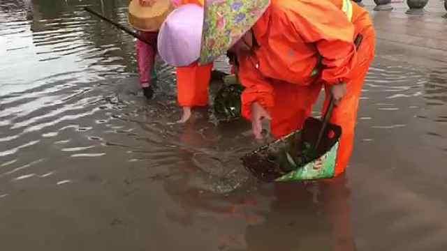 台风后下水道被堵,环卫工徒手清理