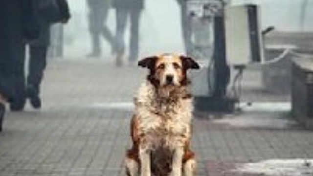流浪的狗狗,到底多想有一个家?