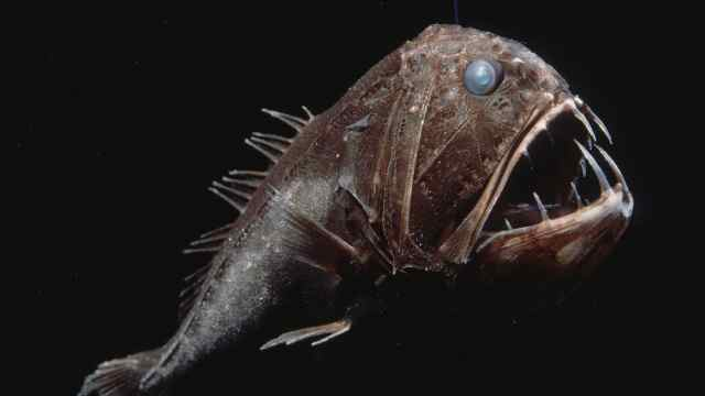 深海里的奇特生物,一个比一个吓人
