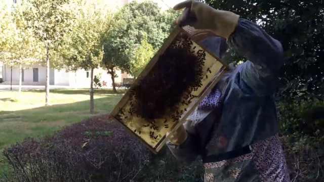 大爷教学楼旁养万只蜜蜂,吓坏学生