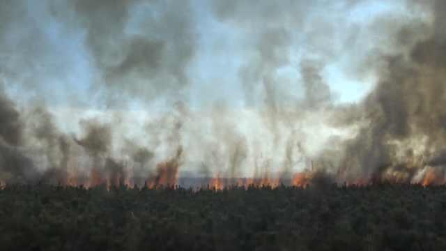 疑市民上坟失火,20亩松树林变火海