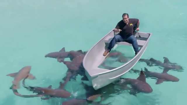 真这么神?防水防鲨鱼的黑科技胶带