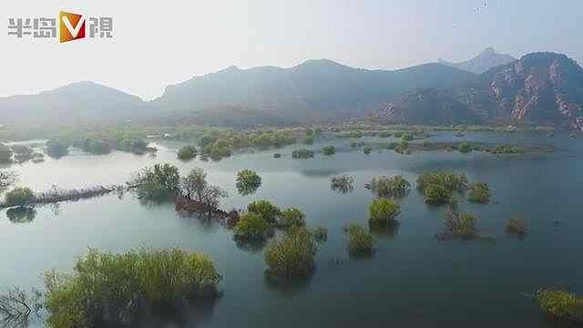 青岛郊外还有片水上森林,美不胜收