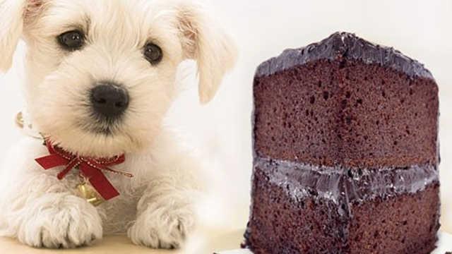 为什么不能给狗狗吃巧克力?