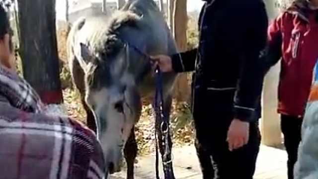 猛犸视频丨狂奔的马撞上宝马车