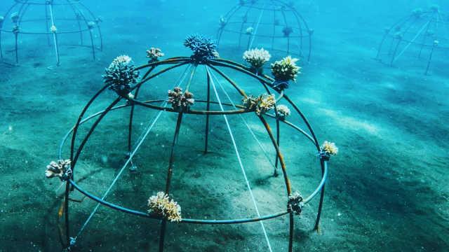 如果40年后,海底无礁