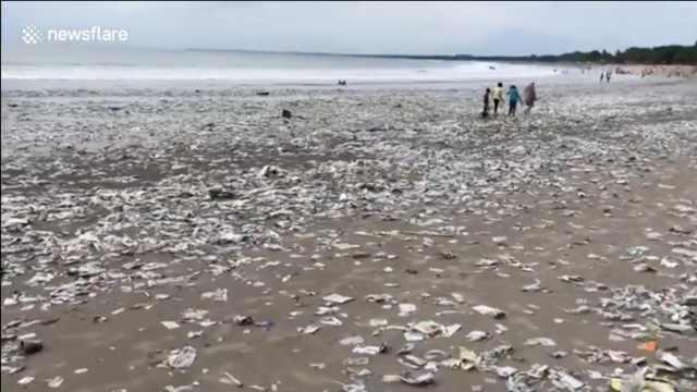 一夜風暴,巴厘島海灘沖上成噸垃圾