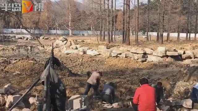 青岛中山公园小西湖改造,清理淤泥