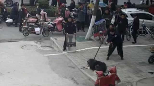1米阿拉斯加街头咬伤老人,民警击毙