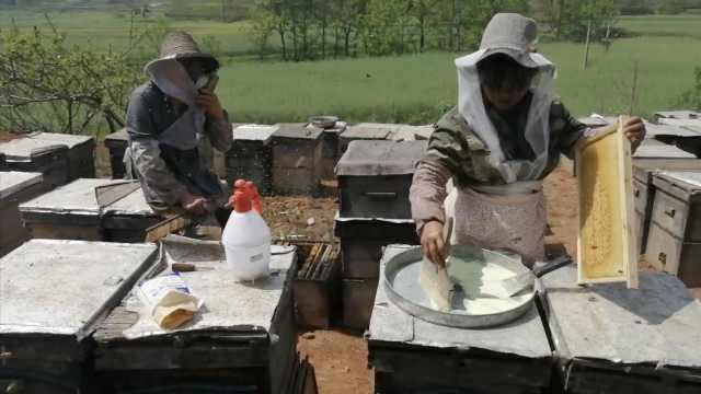 夫妇带245桶蜂酿蜜15年,蜜4年不腐