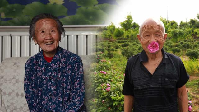 八旬老夫妻种玫瑰数十年:花香养人