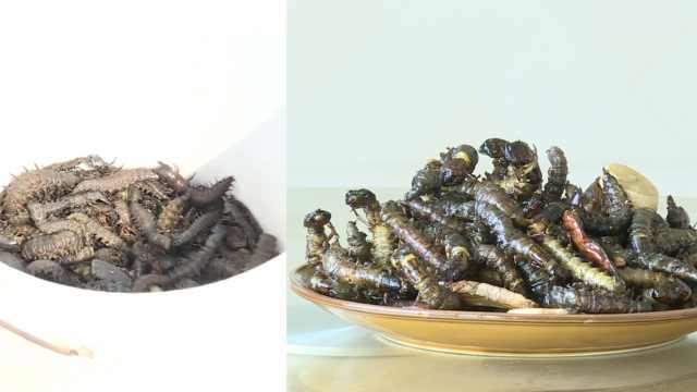 云南奇妙料理爬沙虫:高蛋白像蜈蚣