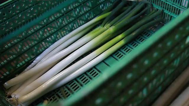 垃圾為何分干濕?日本剩食回收運動
