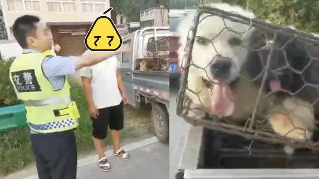 超速货车现20条宠物狗,司机:买来吃