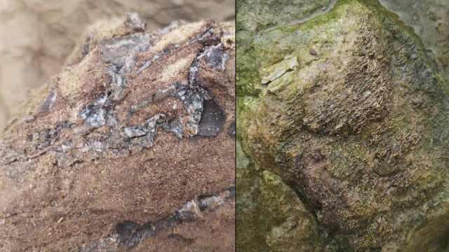 现场!广安疑发现大量恐龙骨骼化石